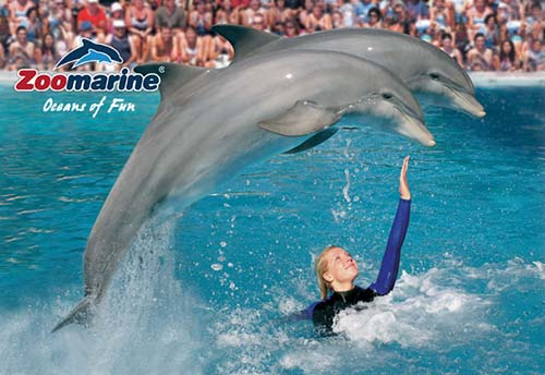 Zoomarine trainer with 2 dolphins
