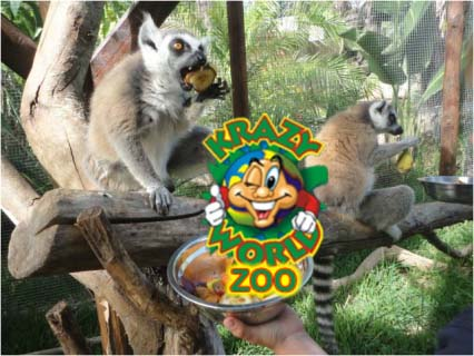 Lemurs at Krazy World Zoo