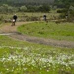 2 motorbikes on a dirt road, with white flowers, Alzejur.