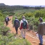 Elders walking though a dirt track, with vegetation on both sides.